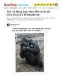 Buzzfeed_10.29_NEWS BLOG